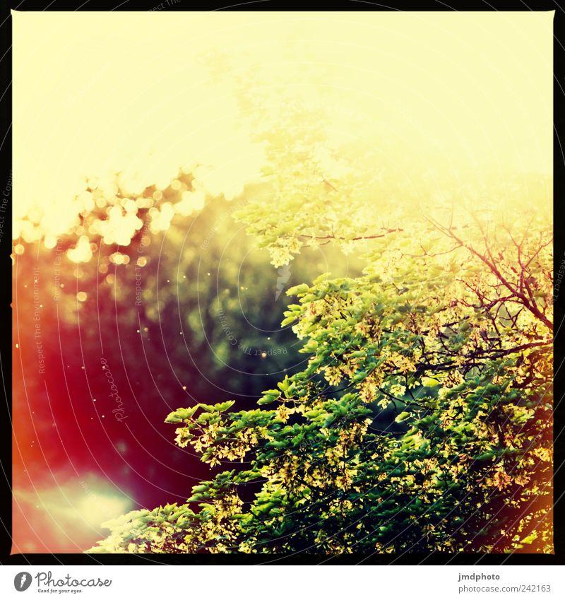 Sommerluft Natur Ferien & Urlaub & Reisen Baum Pflanze Erholung Umwelt Wärme Luft Park Tanzen fliegen Klima natürlich frei leuchten