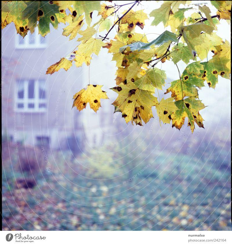 im Herbst der Nebel Natur Baum Pflanze Blatt Einsamkeit Tier Herbst Umwelt Garten Stimmung Park Freizeit & Hobby Wohnung Fassade Nebel natürlich