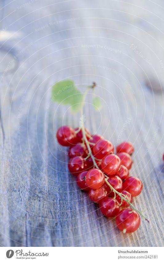 Hannes` Beeren Lebensmittel Frucht Johannisbeeren Ernährung Picknick Bioprodukte Sommer Garten Natur Pflanze Holz frisch Gesundheit lecker rund süß rot genießen