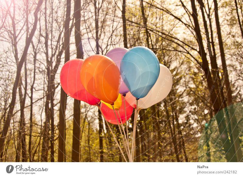 Balloon #2 Sommer Feste & Feiern Umwelt Natur Sonnenlicht Frühling Schönes Wetter Baum Park Wald Luftballon Holz Erholung Wachstum Freude Glück Zufriedenheit