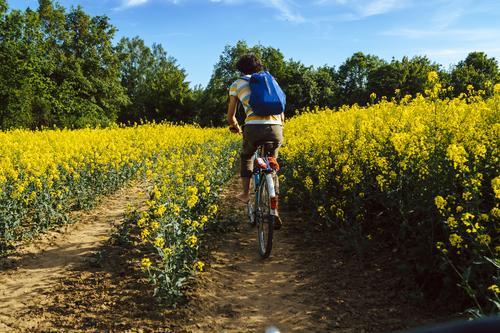 Junger Mann fährt mit dem Fahrrad durch ein Rapsfeld Glück Leben Zufriedenheit Freizeit & Hobby Ferien & Urlaub & Reisen Tourismus Ausflug Freiheit Expedition