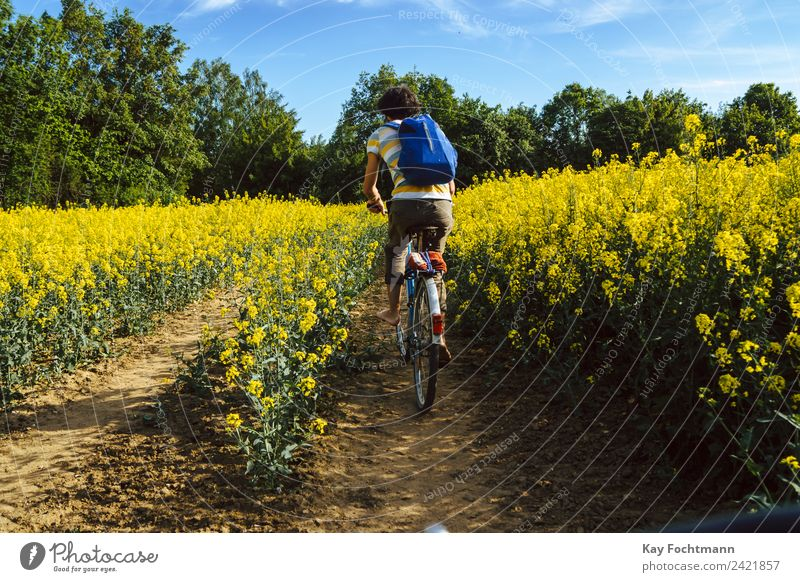 Junger Mann fährt mit dem Fahrrad durch ein Rapsfeld Mensch Natur Ferien & Urlaub & Reisen Jugendliche Sommer Erholung 18-30 Jahre Erwachsene Leben Bewegung