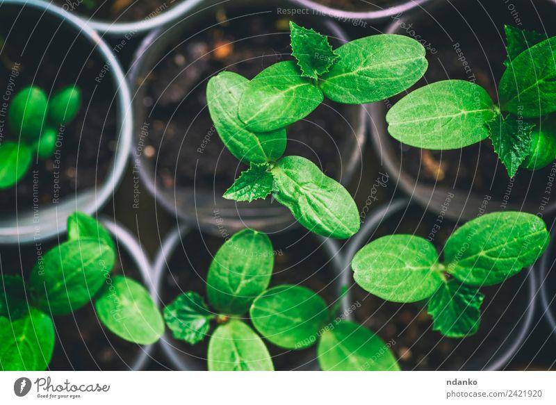 Natur Pflanze grün Blatt Umwelt klein oben Wachstum frisch Botanik Gartenarbeit