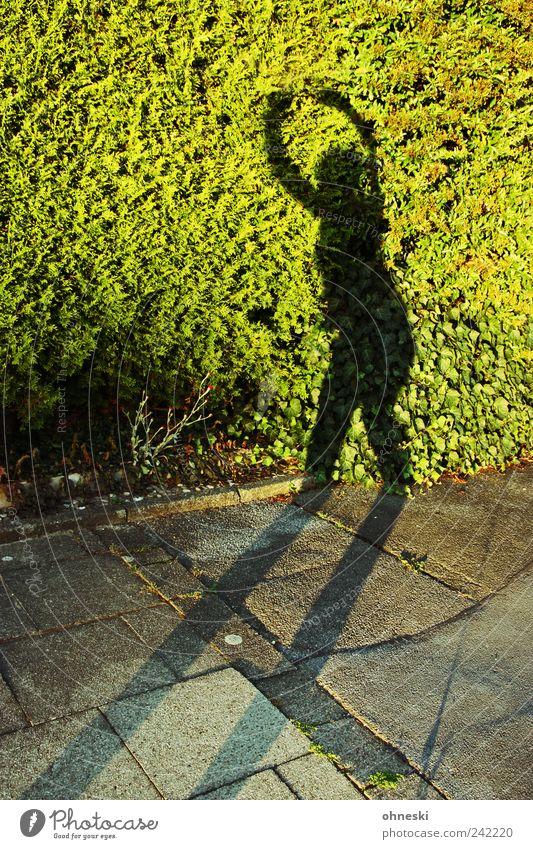 Dance Mensch Pflanze Sommer Freude feminin Tanzen Fröhlichkeit Bürgersteig Schönes Wetter Lebensfreude Begeisterung Hecke Grünpflanze Strukturen & Formen Silhouette