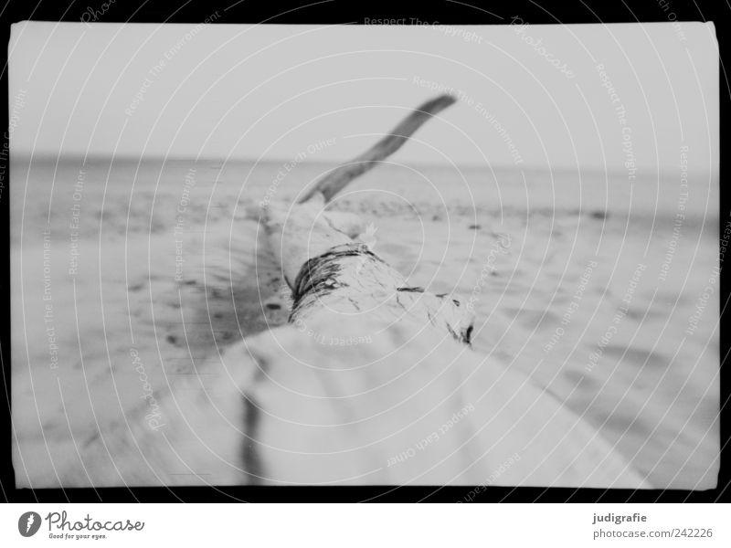 Weststrand Natur weiß Baum Meer Strand ruhig schwarz Tod grau Sand Landschaft Stimmung Küste Umwelt Vergänglichkeit wild