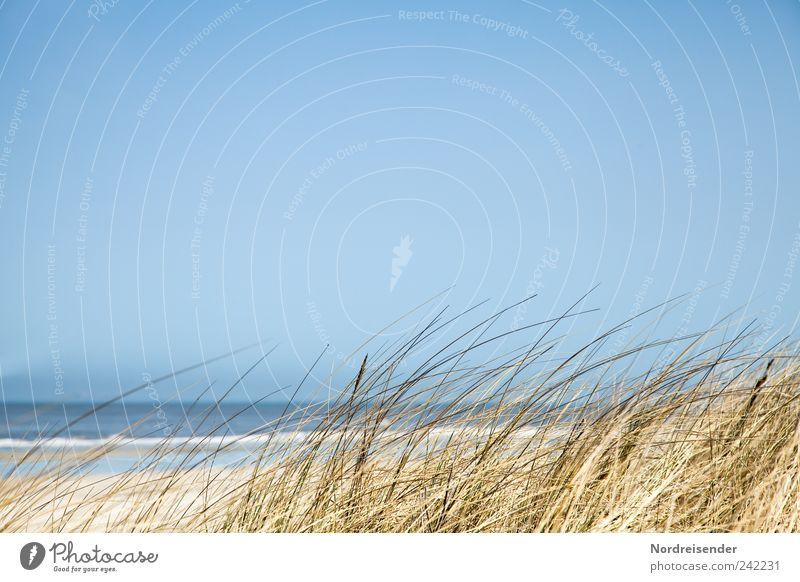 Spiekeroog | Gras Natur Ferien & Urlaub & Reisen Sommer Erholung Meer Landschaft ruhig Strand Ferne Wärme Küste Hintergrundbild Schönes Wetter Romantik Fernweh