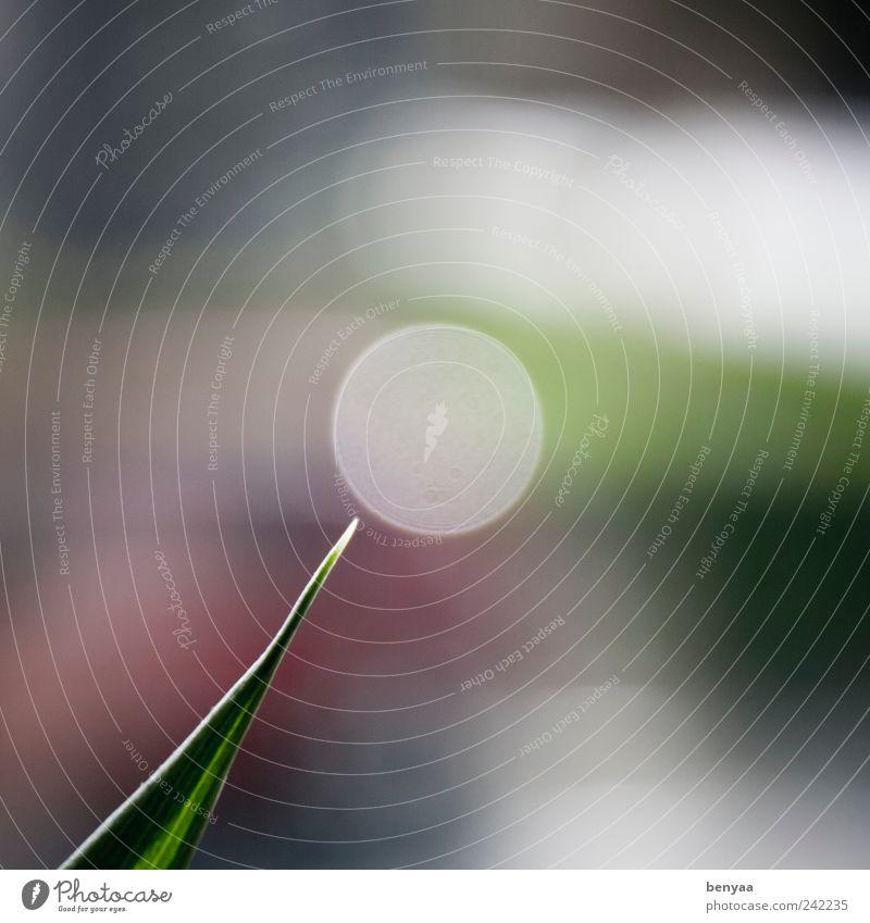 Stammzellenforschung grün Pflanze außergewöhnlich Kreis rund Spitze Mitte Wissenschaften Genauigkeit Präzision Mittelpunkt kreisrund Unschärfe abstrakt Punkt