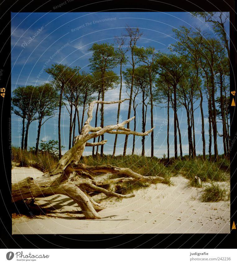 Weststrand Natur Himmel Baum Pflanze Strand Wolken kalt Tod Gras Sand Landschaft Stimmung Küste Umwelt Wachstum Wandel & Veränderung