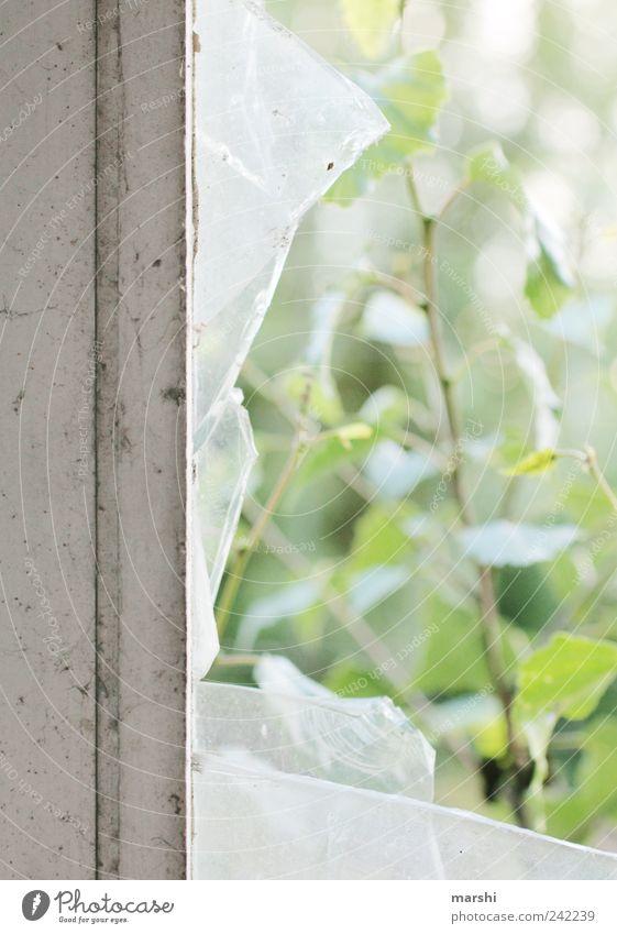 zerbrochen Natur alt Fenster Fensterscheibe Fensterrahmen Blatt Glas gebrochen zerbrechlich Zerstörung Zerbrochenes Fenster Glasscheibe kaputt Ruine Farbfoto
