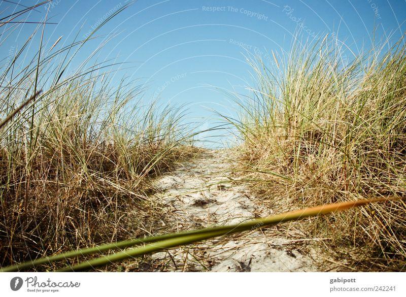 ein hauch von seeluft Umwelt Natur Landschaft Pflanze Sand Himmel Wolkenloser Himmel Sommer Schönes Wetter Gras Sträucher Küste Strand Nordsee Ostsee Stranddüne