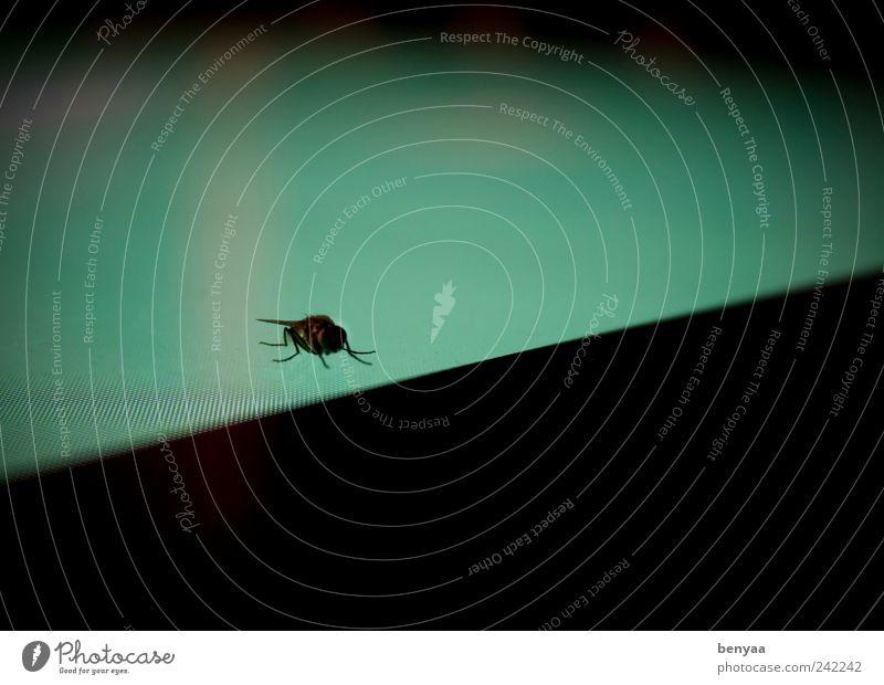 Ausflug ins Grüne Tier Wildtier Fliege 1 fliegen krabbeln sitzen warten grün Einsamkeit Flugangst gefährlich Farbe Bildschirm Insekt digital Farbfoto