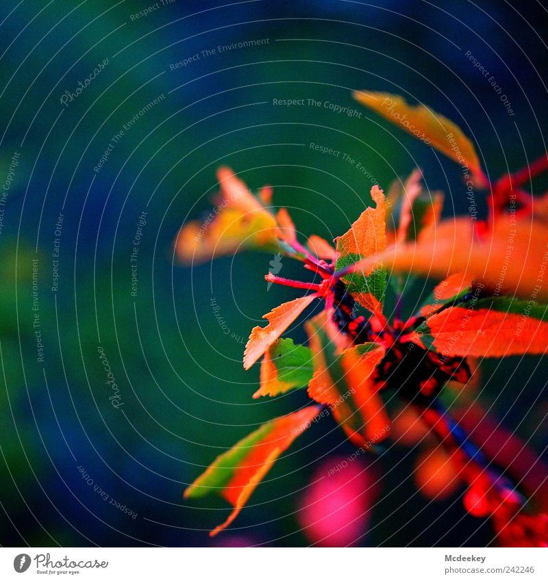 natural colorgame 3 Natur blau grün weiß Baum Pflanze rot Sommer Blatt schwarz gelb Wiese braun rosa natürlich Sträucher