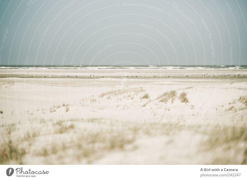 Spiekeroog l gathering Strand Meer Umwelt Natur Landschaft Sand Horizont Sonnenlicht Sommer Wetter Schönes Wetter Küste Tier Wildtier Vogel Möwe Tiergruppe