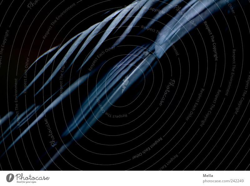 Black Line schwarz Tier dunkel Vogel Perspektive nah Feder Flügel diagonal Rabenvögel gefiedert Kolkrabe