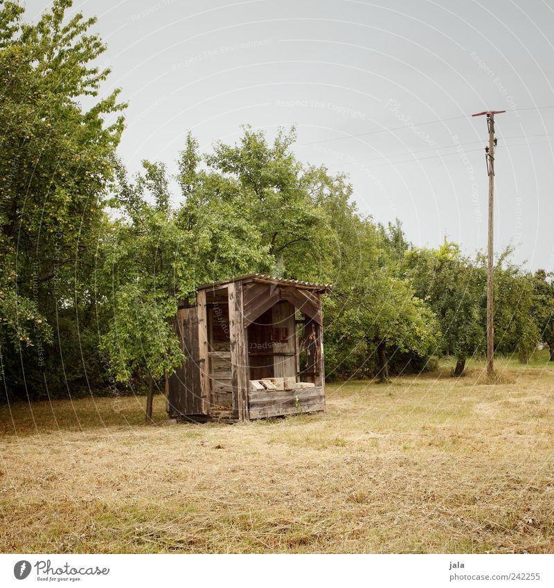 hütte Natur Landschaft Himmel Pflanze Baum Gras Sträucher Grünpflanze Nutzpflanze Wildpflanze Feld Hütte natürlich Farbfoto Außenaufnahme Menschenleer