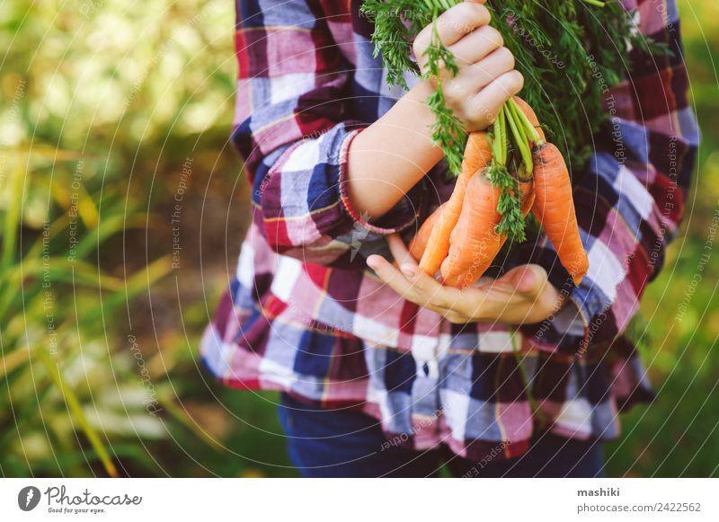 Kind Natur grün Landschaft Freude Lifestyle Herbst lustig natürlich Familie & Verwandtschaft Glück klein Wachstum frisch Gemüse Jahreszeiten