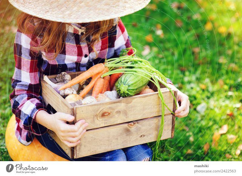 glücklich Bauer Kind Mädchen Pflücken Herbsternte Gemüse Lifestyle Freude Familie & Verwandtschaft Natur Landschaft Hemd Hut Wachstum frisch natürlich grün