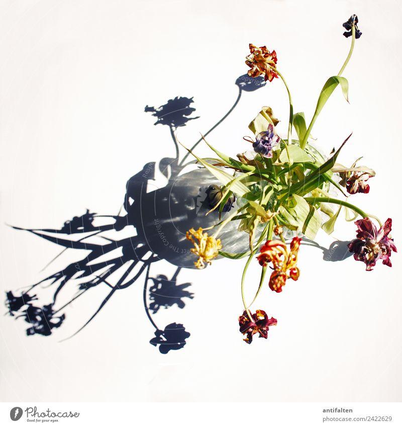 Ende der Tulpenzeit Natur Pflanze Blume Blatt Blüte Blumenstrauß Dekoration & Verzierung Vase Blumenvase Glas verblüht natürlich mehrfarbig grün orange
