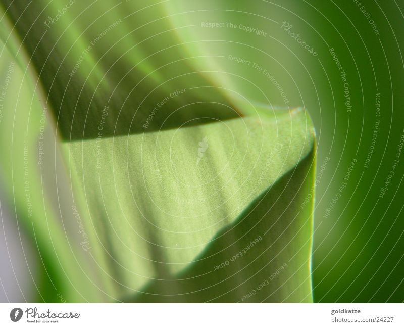 palmengrün 2 Pflanze Blatt Farbe Hintergrundbild weich Schwung