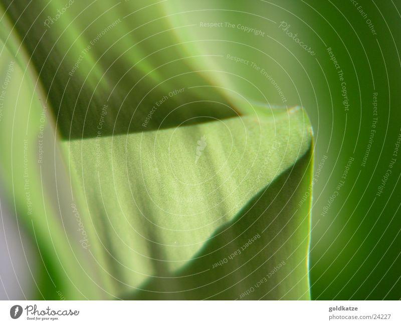 palmengrün 2 Pflanze Blatt weich Schwung abstrakt Hintergrundbild Makroaufnahme Nahaufnahme Farbe Detailaufnahme Unschärfe leave blur