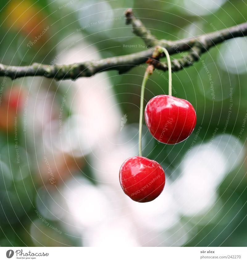 Restbestand Lebensmittel Frucht Kirsche Ernährung Bioprodukte Vegetarische Ernährung Wachstum glänzend rund saftig süß grün rot 2 Ast Unschärfe Zusammensein