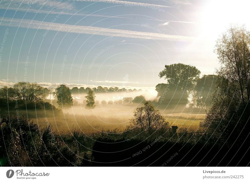 Jolli Nebel Natur Baum Wiese Landschaft Stimmung Feld Sträucher Schönes Wetter Seeufer genießen Morgendämmerung Sonnenuntergang Reinheit Sonnenaufgang