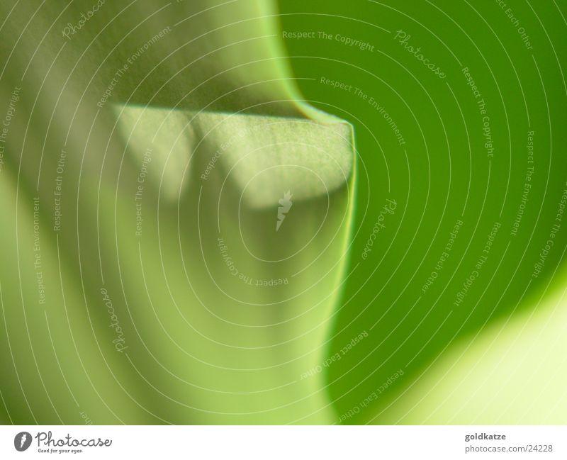 palmengrün 1 Pflanze Blatt weich Schwung abstrakt Hintergrundbild Makroaufnahme Nahaufnahme Farbe leave Detailaufnahme Unschärfe blur