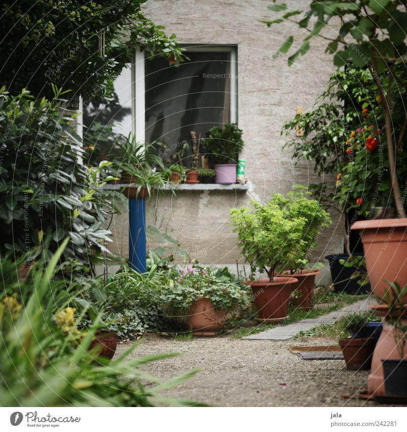 alternativ Blume Sträucher Grünpflanze Topfpflanze Haus Einfamilienhaus Bauwerk Gebäude Architektur schön mehrfarbig grau grün Farbfoto Außenaufnahme