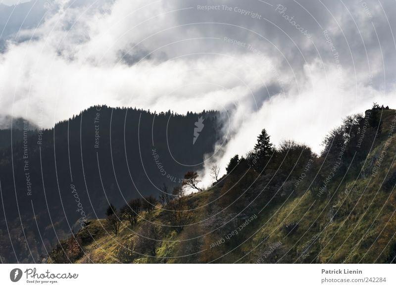 Im Himmel ist kein Platz mehr Natur Pflanze Ferien & Urlaub & Reisen Wolken Ferne Wald Freiheit Umwelt Berge u. Gebirge Landschaft Wetter Freizeit & Hobby
