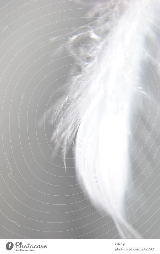 feder Accessoire Metallfeder hängen grau weiß Gelassenheit loslassen Schweben Freiheit Unschärfe