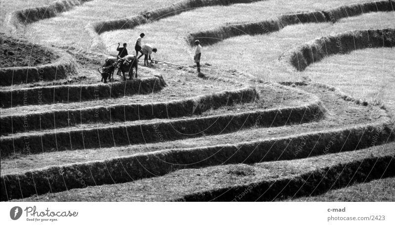 Reisterrassen in Sri Lanka Mensch Arbeit & Erwerbstätigkeit Berge u. Gebirge Reis Schwarzweißfoto Sri Lanka