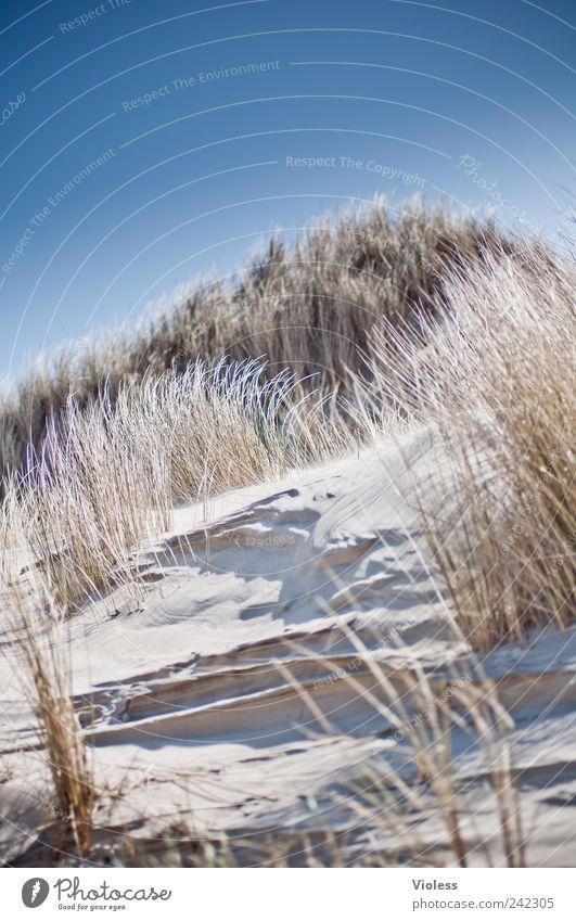 Spiekeroog   ...the dune calls Natur Landschaft Sand Strand Nordsee entdecken Erholung blau Insel Urlaub Düne Dünengras hell Farbfoto Außenaufnahme