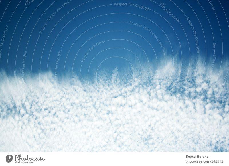 Wolkenspritzer Natur Wasser Himmel weiß blau Sommer Wolken träumen Kraft beobachten einzigartig außergewöhnlich Dynamik Urelemente Schönes Wetter Begeisterung