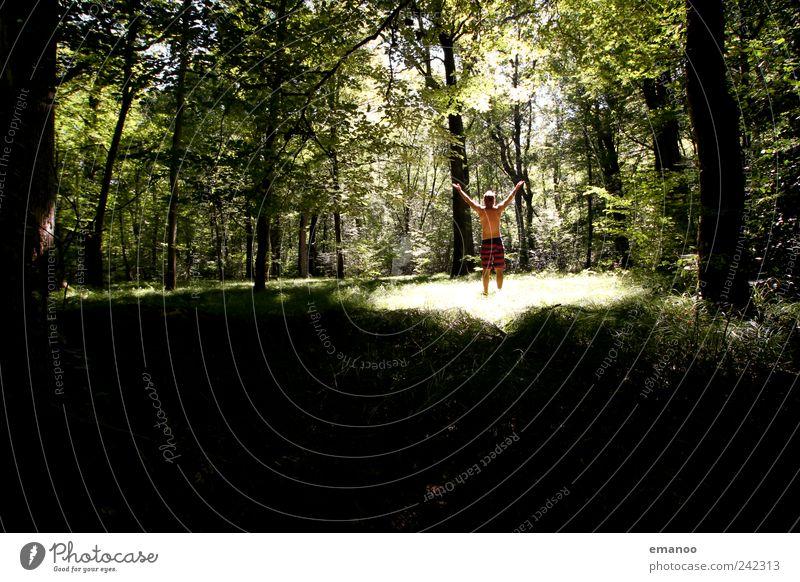 Licht Einfall Mensch Mann Natur grün Baum Pflanze Ferien & Urlaub & Reisen Sommer Freude Erwachsene Wald Landschaft Freiheit Gras Stil Park