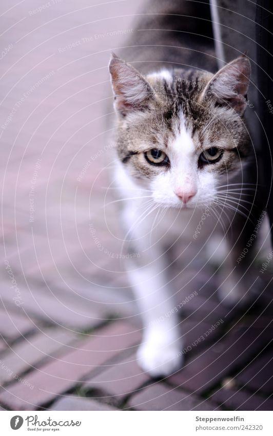 Streunerin Katze weiß Auge Bewegung grau Freiheit Freundschaft Zufriedenheit Perspektive beobachten Pause Kontakt Fell Mitte Partnerschaft Backstein