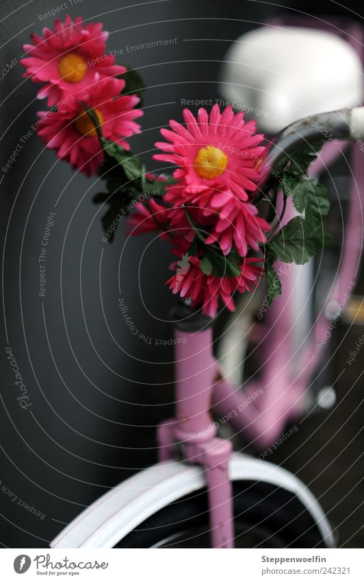 Mädchenrad Erholung feminin rosa violett Blühend parken Fahrrad Klischee Fahrradsattel Fahrradlenker