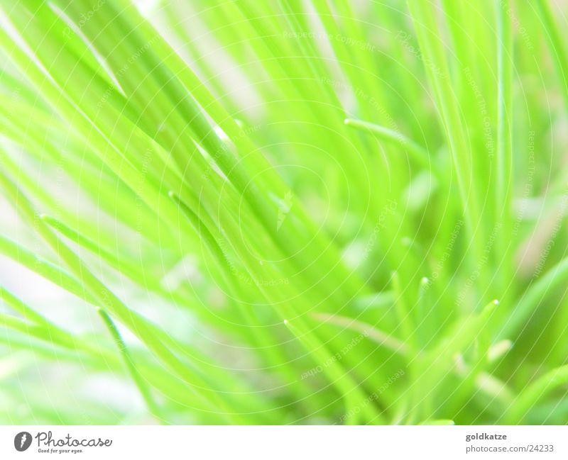 grünzeug Lebensmittel Kräuter & Gewürze Ernährung Bioprodukte Vegetarische Ernährung Küche Pflanze Frühling Sommer Gras Blatt Nutzpflanze Topfpflanze Garten