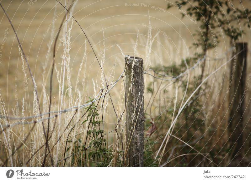 zaun Natur grün Pflanze Gras Feld Sträucher natürlich Zaun beige Wildpflanze Zaunpfahl