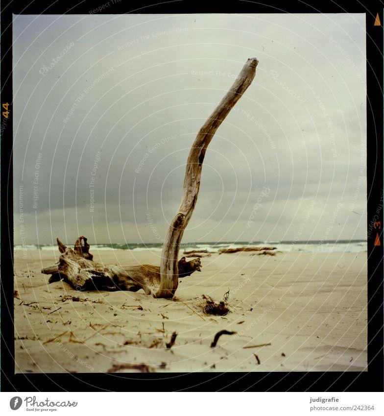 Weststrand Natur Wasser Himmel Baum Meer Strand Wolken kalt Sand Landschaft Stimmung Küste Umwelt Wandel & Veränderung Klima Vergänglichkeit