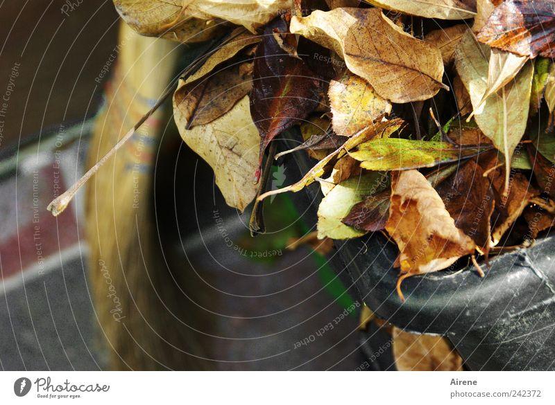 Fertig! Arbeit & Erwerbstätigkeit Handwerker Gartenarbeit Feierabend Besen Herbst Pflanze Blatt Terrasse Stein Reinigen alt braun gold grau fleißig
