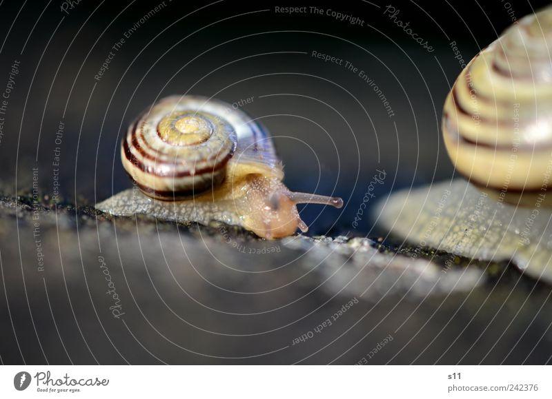 Mama bitte nicht so schnell! Tier Regen Linie Tierjunges Häusliches Leben Schnecke Spirale krabbeln Fühler schleimig Schneckenhaus Mensch schleichen Schleimer anbiedern