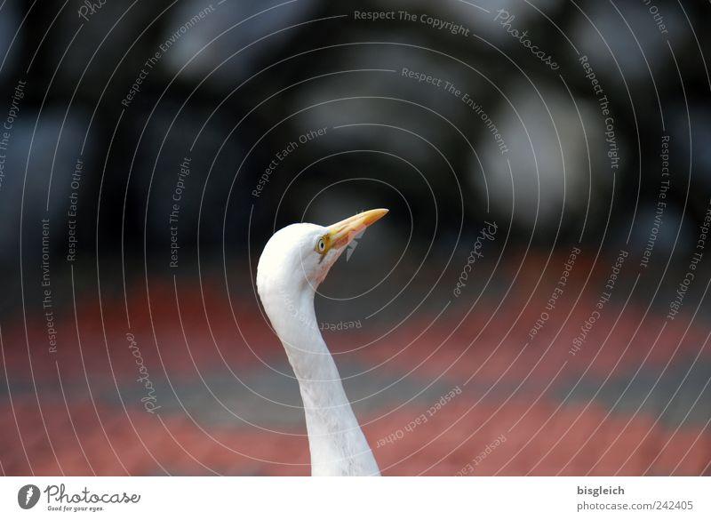 Kuala Lumpur Bird Park I weiß Auge Tier Vogel Tiergesicht Hals Schnabel