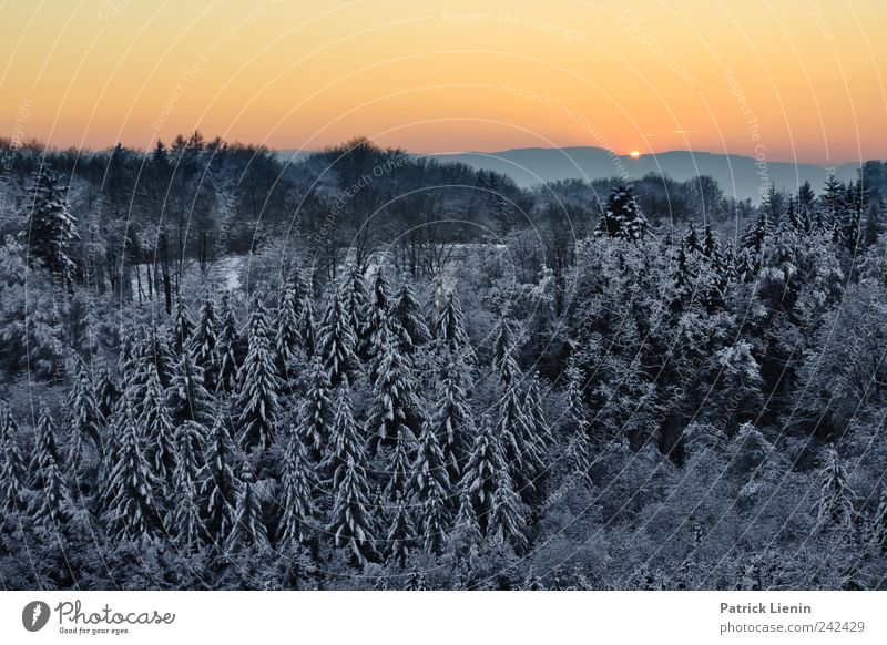 Wenn jetzt Winter wär Himmel Natur Baum rot Sonne Ferien & Urlaub & Reisen Schnee Umwelt Berge u. Gebirge Landschaft Wetter Horizont Urelemente Hügel Tanne