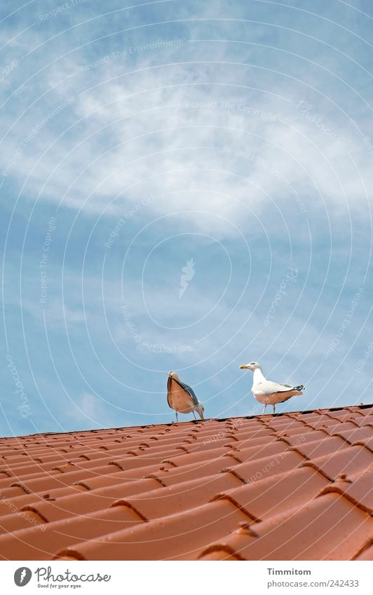 Die roten Wellen reiten schön blau rot Sommer Freude ruhig Tier Leben Gefühle Glück Freundschaft Zufriedenheit Zusammensein Vogel Fröhlichkeit ästhetisch