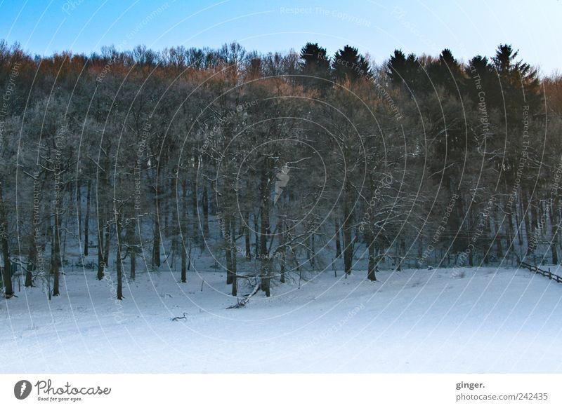 Wintermorgenstimmung Umwelt Natur Landschaft Pflanze Himmel Klima Wetter Schönes Wetter Eis Frost Schnee Baum Wald Wachstum wandern kalt Laubbaum Nadelbaum