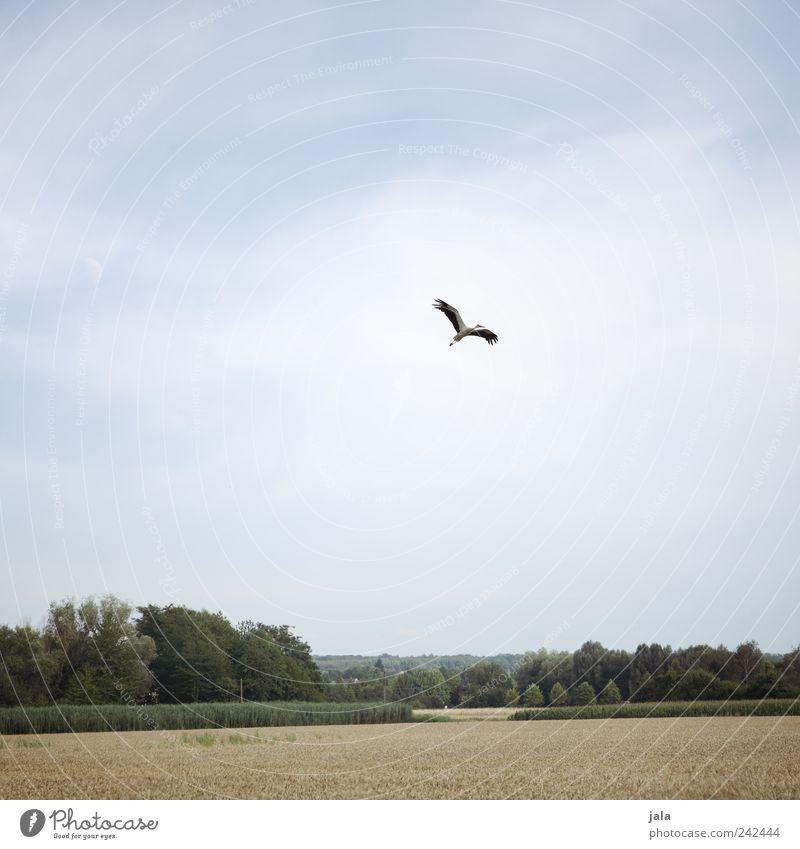 storch Natur Himmel Baum grün blau Pflanze Tier Wald Gras Landschaft Vogel Feld fliegen Sträucher natürlich Unendlichkeit