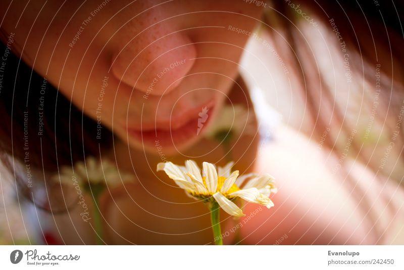 Blumenromanze Kind Mensch Natur Jugendliche schön Mädchen Pflanze Sommer Blatt feminin Kopf Blüte Haare & Frisuren Kindheit Mund