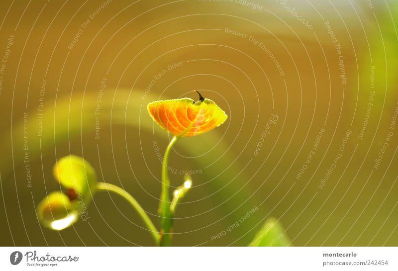 Pappellinchen Natur Pflanze Sonnenlicht Sommer Schönes Wetter Baum Blatt Grünpflanze Garten Park Kreativität skurril Farbfoto mehrfarbig Außenaufnahme