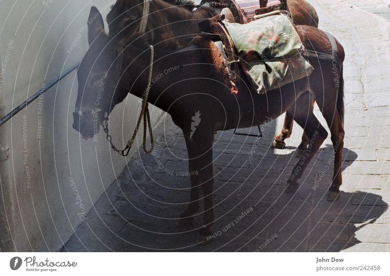 gesattelt Ferien & Urlaub & Reisen Tier Straße Wege & Pfade warten Verkehr Tourismus stehen Ausflug Griechenland Altstadt Nutztier Herde Verkehrsmittel bequem Esel