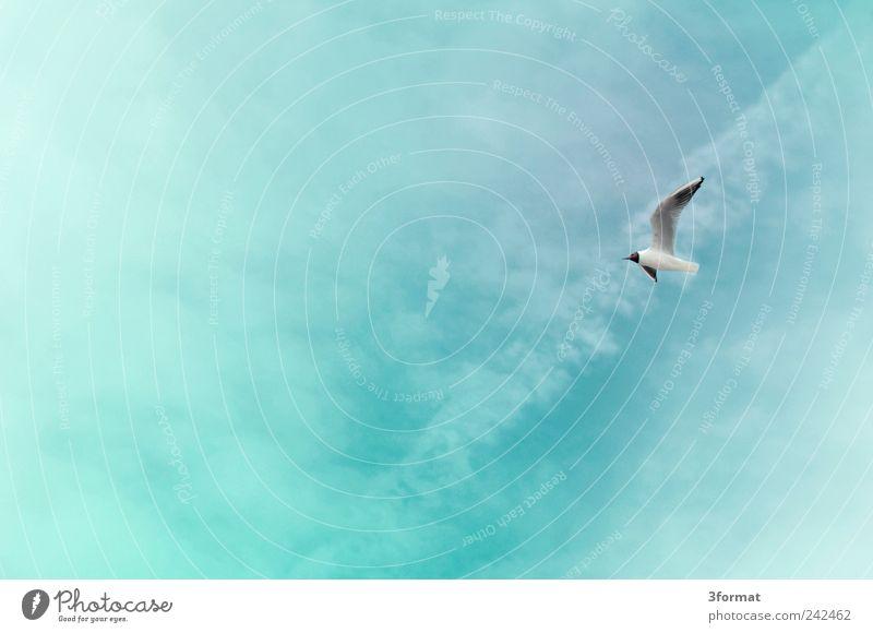 MÖWE Himmel Natur blau Pflanze Sommer Strand Ferien & Urlaub & Reisen Meer Wolken Ferne Tier Freiheit Glück Küste Luft Vogel